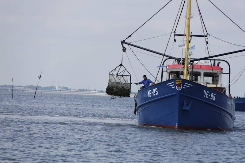 Een mossel kotter op de Oosterschelde welke de vangst binnen haalt