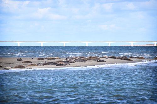 Zeehondjes kijken op de Oosterschelde